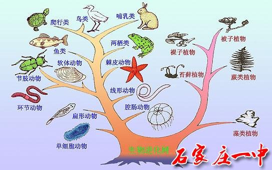 地球上最早的动物是单细胞的原生动物。 多细胞动物是由原始的单细胞动物演变而来的。一般认为多细胞动物起源于原始的鞭毛虫类,因为它们有许多种类表现出向多细胞状态发展的倾向,如团藻、空球藻等。 低等多细胞动物有多孔动物和腔肠动物。它们具有内外两胚层。内胚层是由囊胚细胞内陷或移入形成。在多孔动物,内胚层围的原肠腔不具有消化能力,只有细胞内消化,被认为是进化过程的侧生动物;而在腔肠动物,原肠腔即消化循环腔,原肠胚的开口则成为将来的口。腔肠、扁形、原腔、环节、软体、节肢动物等各门动物都为原口动物。 扁形动物是无体腔的